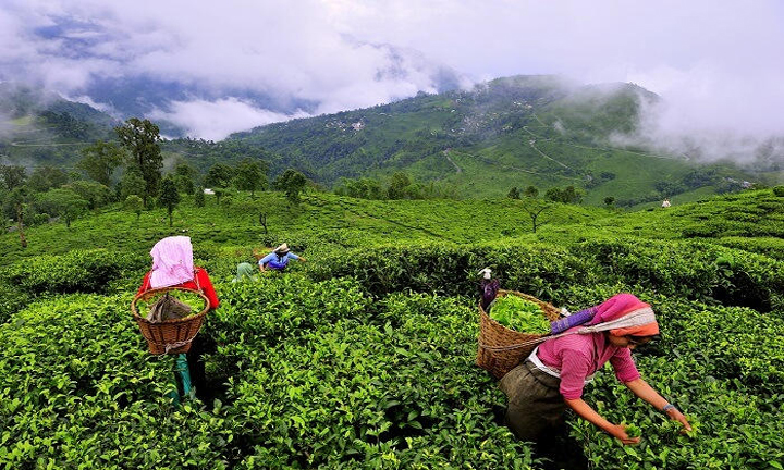 Munnar Weekend Family Group Tour